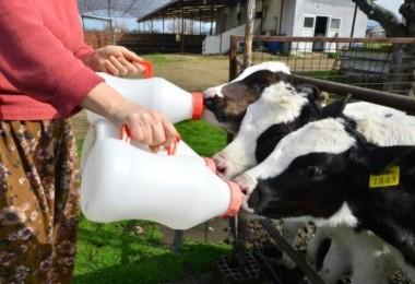Süt Kalite Desteklemesi Ödenmek Üzere Bakanlığa Gönderildi