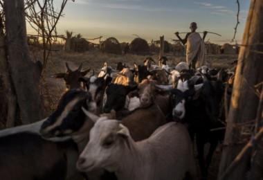 Nijerya'daki Çiftçiler İle Çobanların Çatışmalarında 3 Bin 600 Ölü