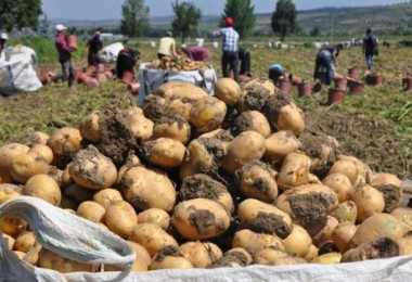 Suriye'den Sözleşmeli Üretim Yaptığımız Patatesleri Getirdik