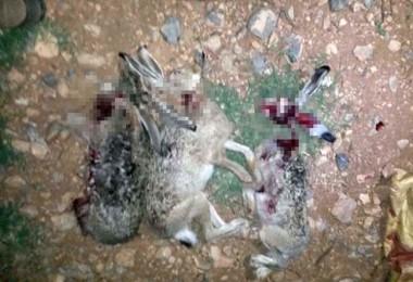 Kaçak Tavşan Avcısına 4 Bin Lira Ceza Kesildi, Traktörüne El Kondu