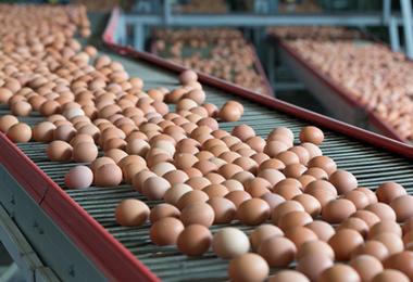 Yumurta Fiyatlarını Biz İndirdik Siz de İndirin Çağrısı
