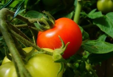 Bitkisel Ürünler İçin Sigorta Zamanı !