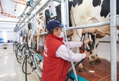 Süt Ve Süt Ürünleri Üretimi Temmuzda Azaldı