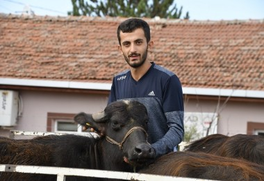 Tokat'ta Genç Çiftçilere Manda Dağıtıldı