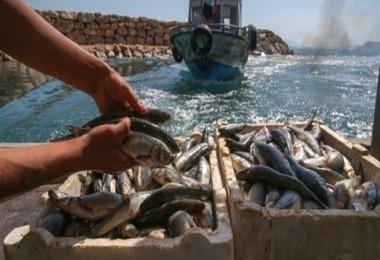 Van Gölünde Kayıtlı Balıkçı Teknelerine 1.250 TL Destek