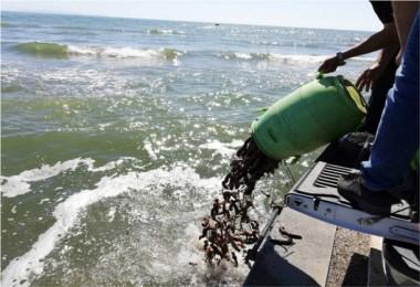 Yasa Dışı Deniz Ürünleri Avlayanlara 29 Bin TL Ceza