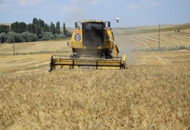 Yozgat, Türkiye'de Buğday Ekiliş Alanına Göre 5.  Sırada