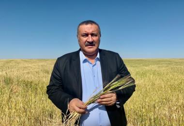 Gürer: Kıraç arazide Buğday üretiminde vahim tablo !