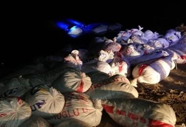 Van'ın Erciş İlçesinde İnci Kefali Katliamı