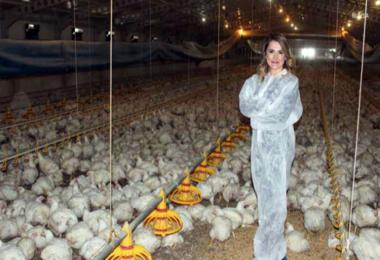 TKDK Destekleri İle Tavuk Çiftliğinin Patronu Oldu