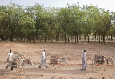 Ormanlar Ve Ağaçlar Sürdürülebilir Bir Gelecek İçin Hayati Öneme Sahip