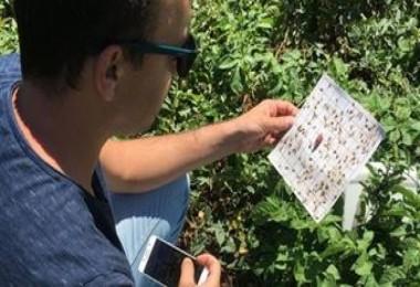 Çiftçilere patates böceği uyarısı