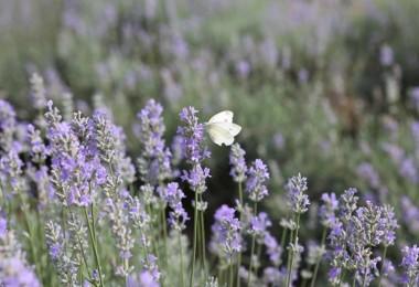 Bolu'da 20 dönüm arazi üzerine 'Aromatik Bitkiler Bahçesi' oluşturuldu