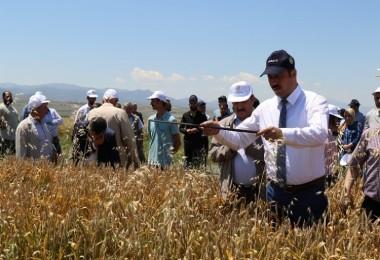 Elazığ'da Süne Sürvey Çalışmaları Devam Ediyor
