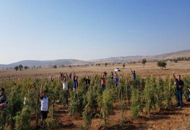 Gönüllü Gençler Goji Berry Meyvesiyle Tanıştı