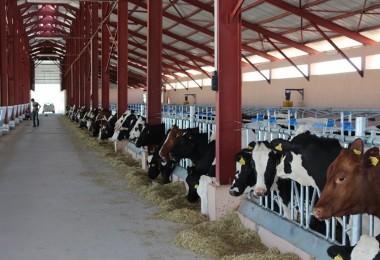 Fransa'daki süt skandalı büyüyor
