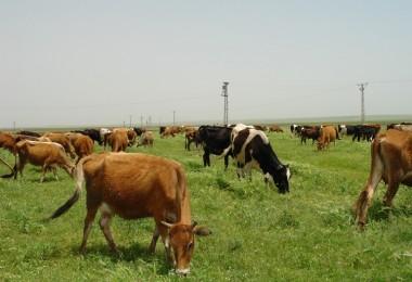 Diyarbakır'da 3 Yılda 808 Genç Çiftçiye 24 Milyon 240 Bin Liralık Hibe
