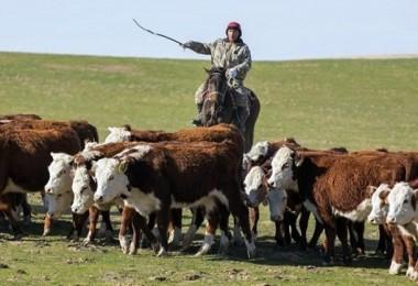 Kazakistan, Büyükbaş Ve Küçükbaş Hayvan İhracatını Yasakladı