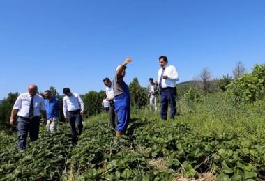 Ülkemizde Organik Tarım Faaliyetleri Her Gün Daha Da Artış Gösteriyor