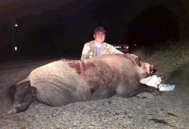 250 kiloluk yaban domuzunu avladı