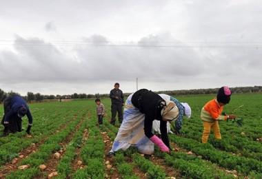 Tarımda Suriye'ye bile muhtacız