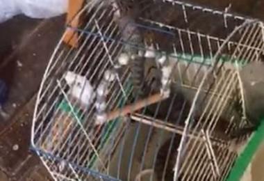 Kuştan ses gelmeyince kafese baktılar, dehşete düştüler!