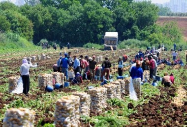 Mevsimlik Tarım İşçilerinin Nakil Ve Barınma Koşulları Düzenlenecek