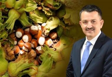 Bakan Pakdemirli: TMO Fındık Piyasasına Müdahale Edecek