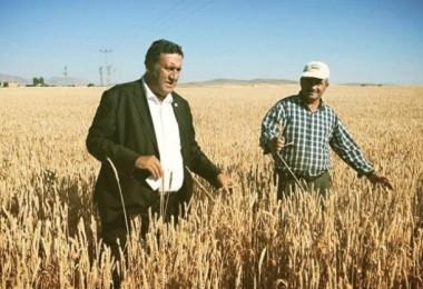 Buğday Sinyal Vermeye Devam Ediyor!
