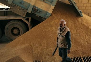 TMO, Suriyeli Çiftçilerden Tahıl Satın Aldı