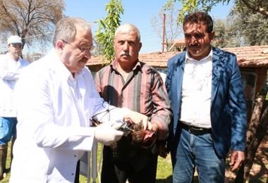 Büyükşehir Belediyesi kanatlı hayvanlara yönelik aşı seferberliği başlattı