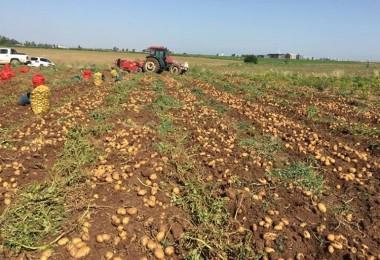 İç Savaştaki Ülkeden Patates İthal Ettik