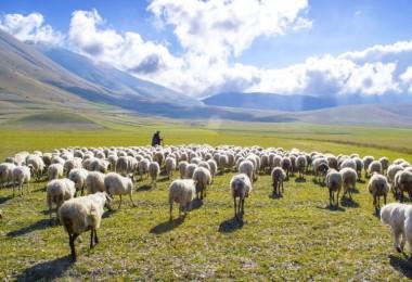 Çoban İkram Edilen Suyu İçince Hayatının Şokunu Yaşadı