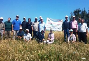Dört Yeni Buğday Çeşidi Üreticilere Tanıtıldı