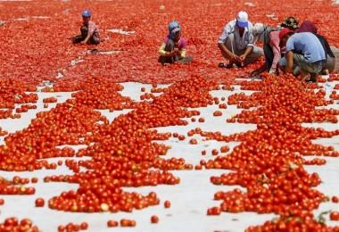 Bayraktar, Çiftçimizin Ürettiği Ürün Değerinden Alıcı Bulamıyor
