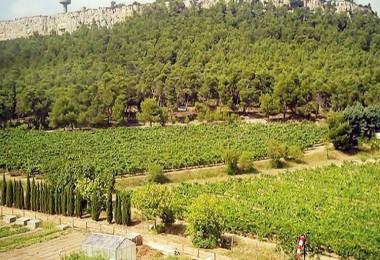 AOÇ'den 3 yıl kiralık tarım arazisi