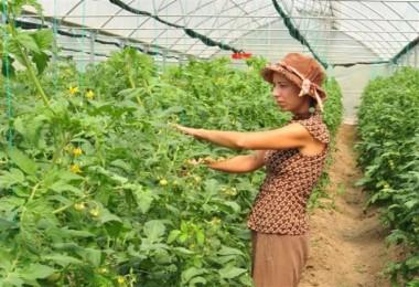 Örtü Altı Yetiştiriciliğinde Genç Çiftçi Farkı