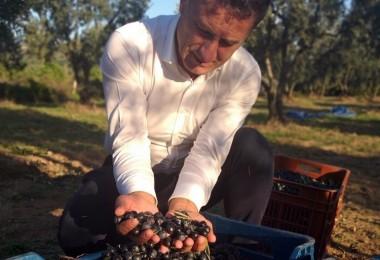 Afrin'den Zeytin Alıp Kendi Üreticisini Unuttular