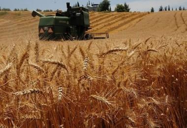 TARSİM'den Samsun'lu Çiftçilere 13,5 Milyon TL Prim Ödemesi