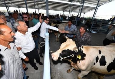 İzmir tarımda, hayvancılıkta, sütte dünyanın takdiri topluyor