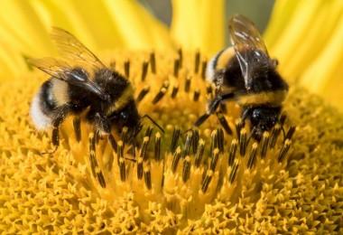 Arıların Hiç Bilmediğimiz Gizemli Dünyası Hakkında Şaşırtıcı Bilgiler