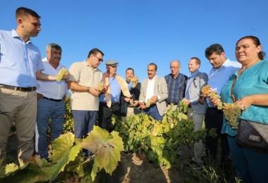 Gökçealan Üzüm Festivali İle Osmanca Üzümü Görücüye Çıktı