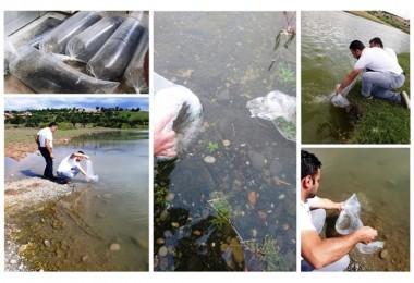 Samsun'da Göl ve Göletlerine 100 Bin Adet Yavru Balık Bırakıldı