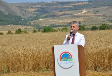 Karabük'te Buğday ve Arpa Çeşit Demonstrasyonu Tarla Günü Düzenlendi