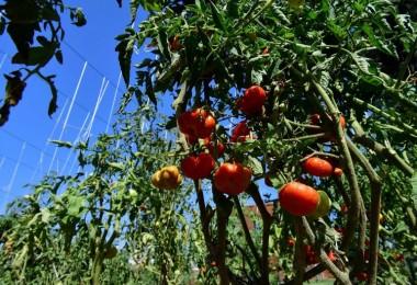 Yaşam Bahçesi bin 556 ailenin sofrasına umut oldu