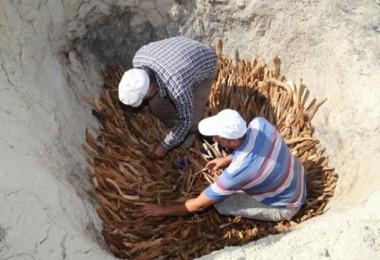 Çukurda 4 gün yakılıyor! Katran yağının kilosu 300 liradan satılıyor