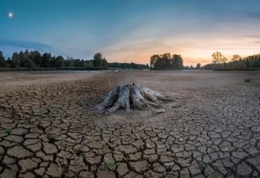 Doğada biyolojik çeşitlilik kaybı giderek artıyor