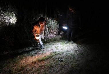 Gaz lambalarıyla gecenin karanlığında kurbağa avlıyorlar! Kilosu 45 TL