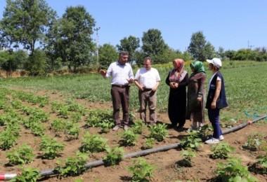 Kocaeli'de çiftçiler çok şanslı