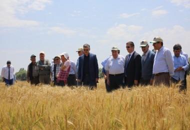 Eskişehir'de Çeşitli Bitki Türlerinde En Yeni Çeşitler Çiftçilere Tanıtıldı